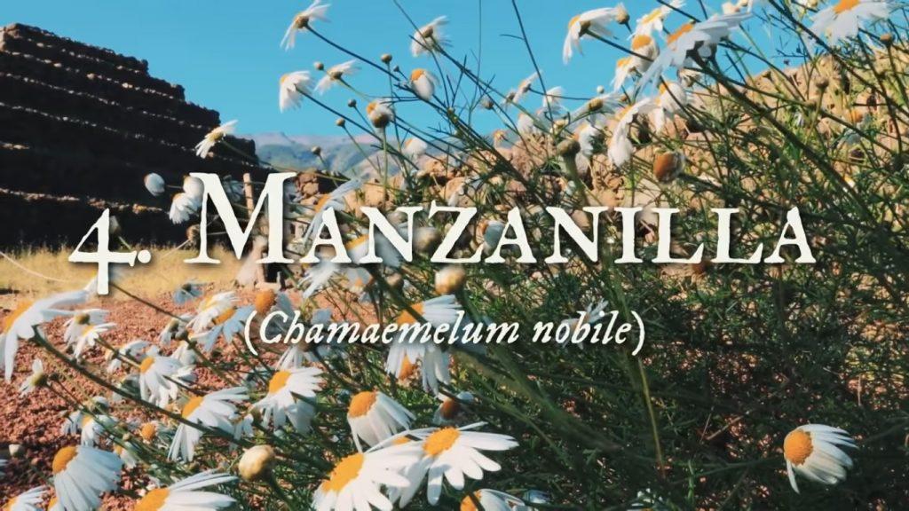 Manzanilla para el cuidado facial con plantas medicinales